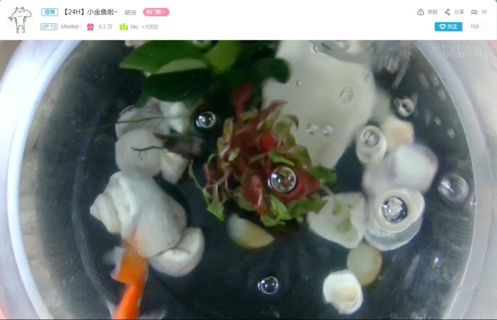 树莓派自动化推流摄像头到Bilibili直播